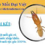 Công ty diệt mối tại Quận 4 – Thành phố Hồ Chí Minh