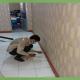Diệt mối tại Lạng Sơn