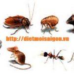 Phun diệt côn trùng ở Cà Mau