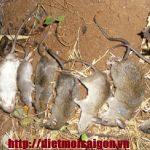 Công ty diệt chuột ở Cà Mau