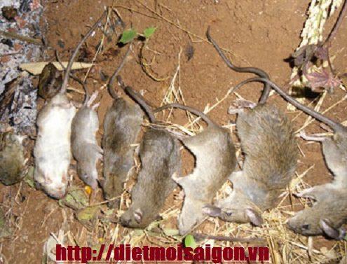 Công ty diệt chuột Thủ Dầu Một