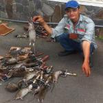 Công ty diệt chuột ở Bắc Ninh
