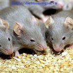 Đơn vị diệt chuột tại Khánh Hoà – Diệt mối, diệt ruồi tận gốc