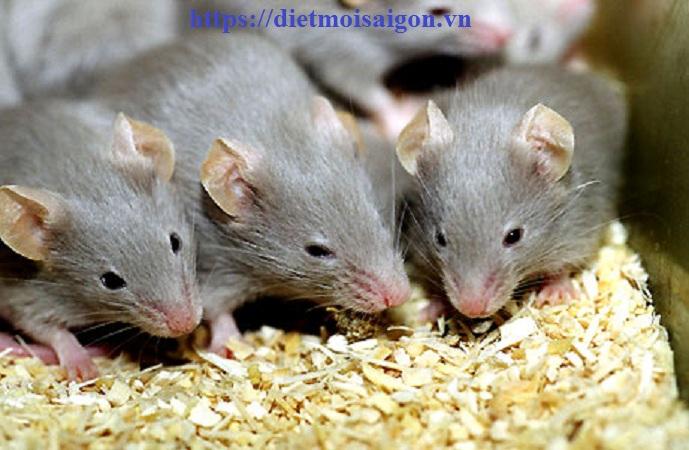 Đơn vị diệt chuột tại Khánh Hoà