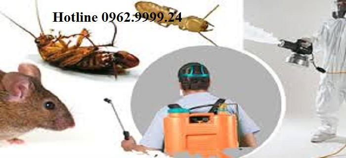 Dịch vụ diệt côn trùng Đà Nẵng1