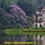 Dịch vụ diệt côn trùng tại Hà Nội – Diệt mối, diệt gián