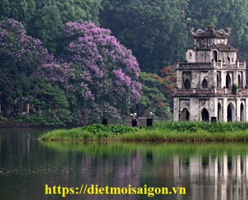 Dịch vụ diệt côn trùng tại Hà Nội