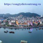 Dịch vụ diệt côn trùng tại Quảng Ninh – Diệt mối, muỗi, kiến