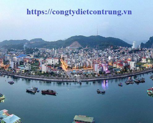 Dịch vụ diệt côn trùng tại Quảng Ninh