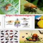 Dịch vụ diệt côn trùng tỉnh Hoà Bình – Diệt mối, muỗi, kiến