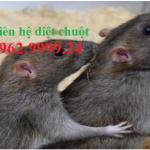 Công ty diệt chuột Thủ Dầu Một – Diệt mối, muỗi
