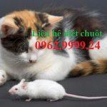 Diệt chuột Nha Trang – Hiệu quả, giá rẻ, an toàn