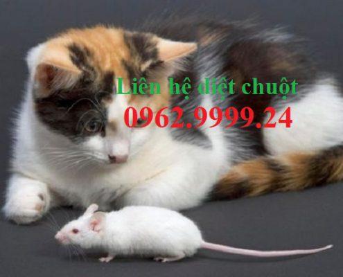 Diệt chuột Nha Trang