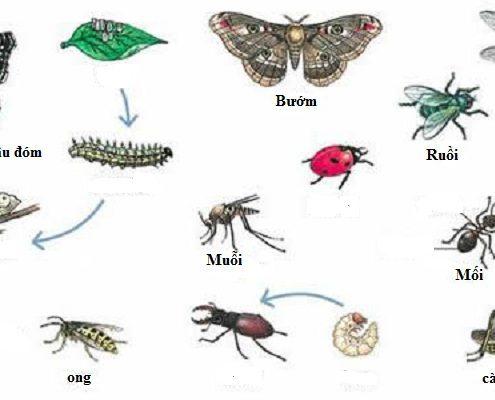 Dịch vụ diệt côn trùng Bình Dương 1