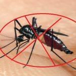 Phun diệt muỗi Bình Phước – Diệt muỗi giá rẻ