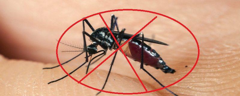 Phun diệt muỗi Bình Phước