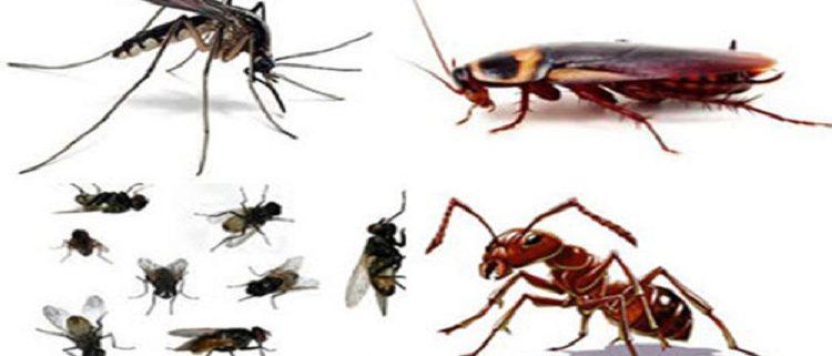 Trung tâm diệt côn trùng tốt nhất Tây Ninh