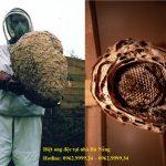 Diệt ong độc tại nhà Đà Nẵng