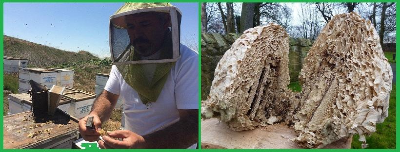 Công ty diệt ong tận gốc tại Bình Dương