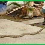 Cơ sở bắt rắn tỉnh Tây Ninh – Công ty Sài Gòn