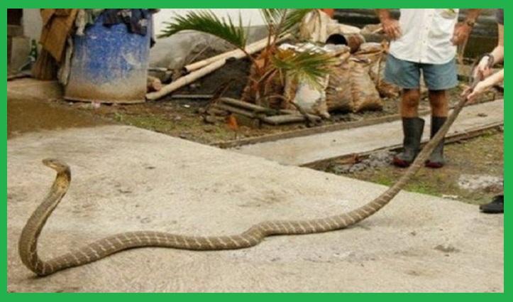 Cơ sở bắt rắn tỉnh Tây Ninh