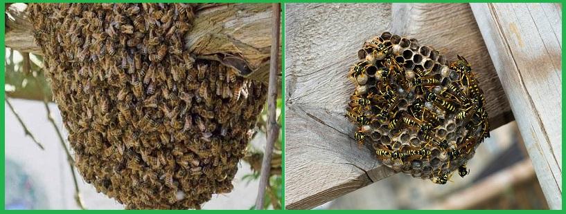 Dịch vụ bắt ong tốt nhất TP.HCM