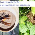 Chuyên gia bắt ong độc Cần Thơ