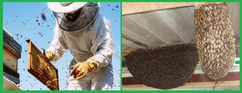 Trung tâm diệt ong hiệu quả Đồng Nai