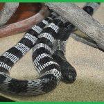 Trung tâm kiểm soát rắn Bình Phước