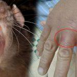 Dịch vụ diệt chuột-Phòng ngừa chuột uy tín, an toàn tại Cần Giờ