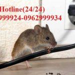 Cơ sở diệt chuột chuyên nghiệp, uy tín hàng đầu tại Quận 7