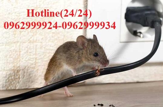 Dịch vụ xử lý chuột tại Quận 1