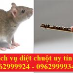 Diệt chuột tại nhà-Ngăn ngừa chuột an toàn, chuyên nghiệp tại Quận 3