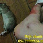 Dịch vụ diệt chuột giá rẻ, chất lượng tại Quận 9