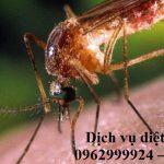 Dịch vụ diệt côn trùng, muỗi chuyên nghiệp tại Quận 1