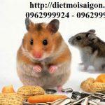 Dịch vụ diệt chuột-Kiểm soát chuột uy tín tại nhà Quận Phú Nhuận
