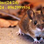 Dịch vụ diệt chuột giá rẻ, an toàn tại Quận Bình Thạnh
