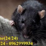Dịch vụ tiêu diệt, ngăn ngừa chuột chuyên nghiệp hàng đầu tại Thủ Đức