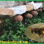 Dịch vụ bắt ong, kiểm soát ong chuyên nghiệp, an toàn tại Hồ Chí Minh